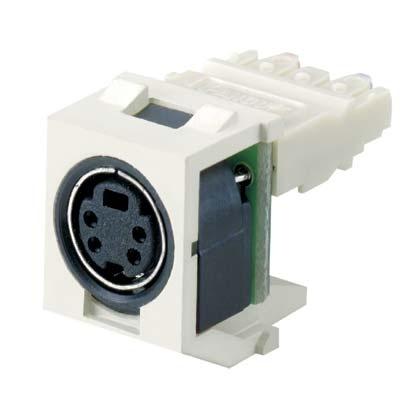 Panduit Conector de Audio SVHS, Blanco